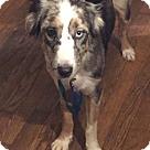 Adopt A Pet :: GRACE