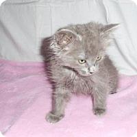 Adopt A Pet :: Sierra - Fayetteville, GA