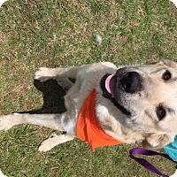Adopt A Pet :: Summer - Tulsa, OK