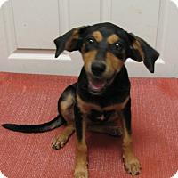 Adopt A Pet :: Charlla - Groton, MA