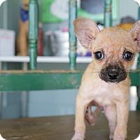 Adopt A Pet :: Squirtle - San Antonio, TX