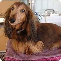 Adopt A Pet :: Joy - Forest Ranch, CA