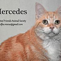 Adopt A Pet :: Mercedes - Ortonville, MI
