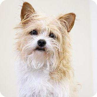 Terrier (Unknown Type, Medium) Mix Dog for adoption in Edina, Minnesota - Travis D161608: PENDING ADOPTION