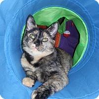 Adopt A Pet :: Tamari - Tega Cay, SC