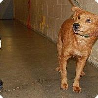 Adopt A Pet :: Bonnie - Willingboro, NJ
