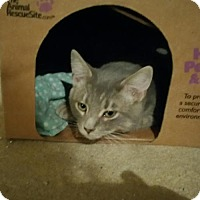 Adopt A Pet :: Crescent - Minneapolis, MN