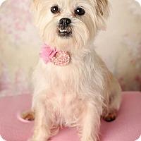 Adopt A Pet :: Winter - Nashville, TN