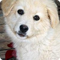 Adopt A Pet :: Pearl/Casey (PLACED) Adoption_Pending - Glendale, AZ