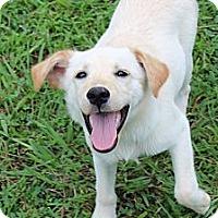 Adopt A Pet :: Emerald - Brattleboro, VT