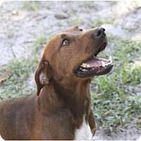 Adopt A Pet :: Bob - Cantonment, FL