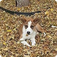 Adopt A Pet :: Ella - Saskatoon, SK