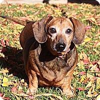Adopt A Pet :: Max - San Jose, CA