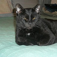 Adopt A Pet :: zz 'Jack' courtesy post - Cincinnati, OH