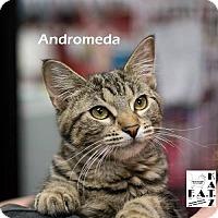 Adopt A Pet :: Andromeda - Albuquerque, NM