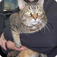 Adopt A Pet :: Sabina - Brooklyn, NY
