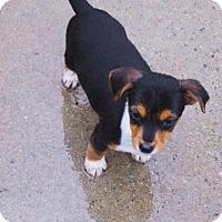 Adopt A Pet :: Asta - Williston Park, NY