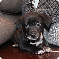 Adopt A Pet :: Mary Lu - Los Angeles, CA