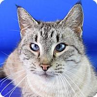 Adopt A Pet :: Twilight - Carencro, LA