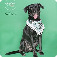 Adopt A Pet :: Hattie - Houston, TX