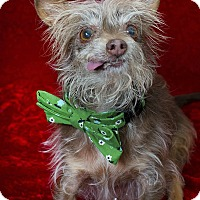 Adopt A Pet :: Elvis - Studio City, CA