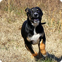 Adopt A Pet :: Kilo - Glastonbury, CT