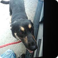 Adopt A Pet :: Asia - springtown, TX