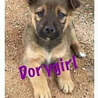 Adopt A Pet :: BP Dorygirl - Tucson, AZ