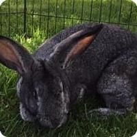 Adopt A Pet :: Jessica - Woburn, MA