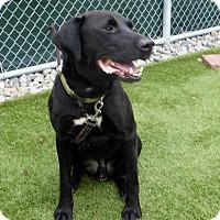 Adopt A Pet :: Skippy - Buckeystown, MD