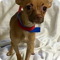 Adopt A Pet :: Mars - Phoenix, AZ