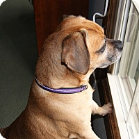 Adopt A Pet :: Tucker - Mt. Prospect, IL