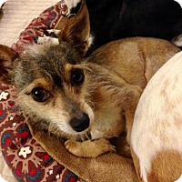 Terrier (Unknown Type, Medium) Mix Dog for adoption in San Pedro, California - Skippy