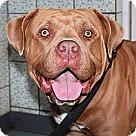 Adopt A Pet :: Murdock