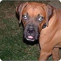 Adopt A Pet :: George - Julian, NC