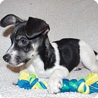 Adopt A Pet :: Baby Scooter - Marlton, NJ
