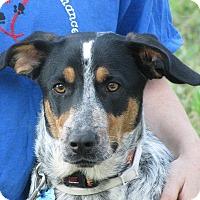 Adopt A Pet :: Morry - Oakland, AR