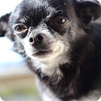 Adopt A Pet :: Freddie - Kempner, TX