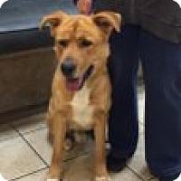 Adopt A Pet :: Howie - Las Vegas, NV