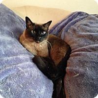 Adopt A Pet :: Isaboo - Austin, TX