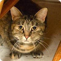 Adopt A Pet :: *LALY - Sacramento, CA
