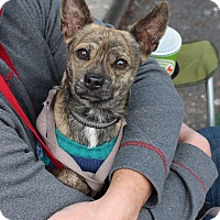 Adopt A Pet :: Eddie - Yuba City, CA