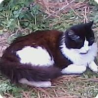 Adopt A Pet :: Diaval - Bentonville, AR