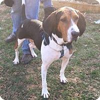 Adopt A Pet :: PRESLEY - Limekiln, PA