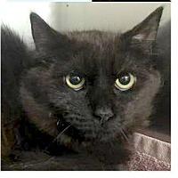 Adopt A Pet :: Robert - Springdale, AR