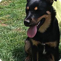 Adopt A Pet :: Julius - Tumwater, WA