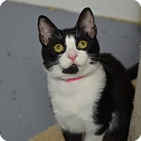 Adopt A Pet :: Wendy150302 - Atlanta, GA