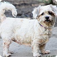 Adopt A Pet :: Spots - Woonsocket, RI