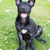 Adopt A Pet :: Zorro - Pittsburgh, PA