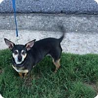 Adopt A Pet :: Sammy Davis - Birmingham, AL